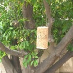 Kid Friendly Birdfeeder Activity