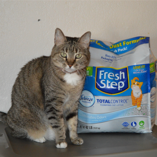 DIY Covered Cat Litter Box with Fresh Step Total Control with the Power of Febreze #yougottabekittenme #ad #cbias